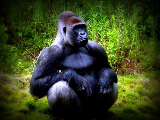 Gorila-sentado1